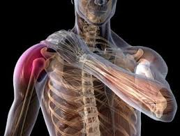 baseball_shoulder_injury
